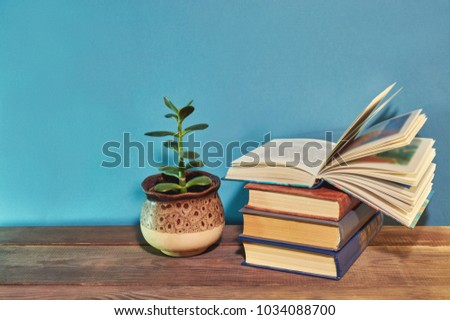 money tree (Crassula ovata) about books on a wooden table