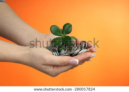 Money tree growing from pile of coins - stock photo