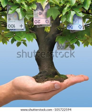 Money tree growing on human hand- polish money - stock photo
