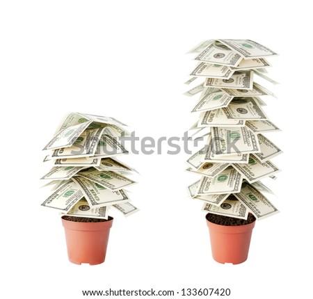 money tree made of dollars isolated on white background - stock photo