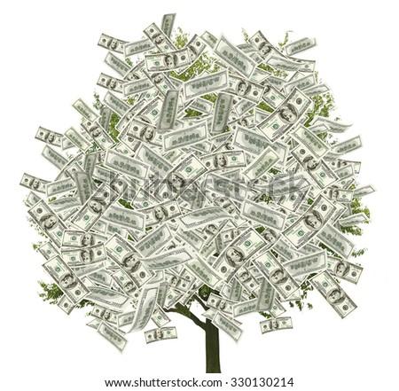 Money tree on white background - stock photo