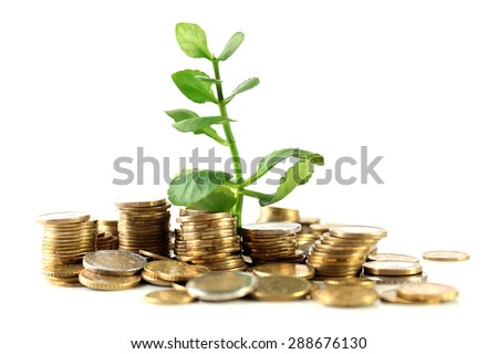 Money with growing sprout isolated on white - stock photo
