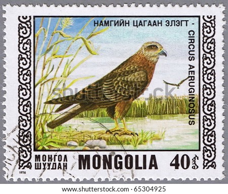 MONGOLIA - CIRCA 1976: A stamp printed in Mongolia shows marsh harrier, series devoted to the birds, circa 1976