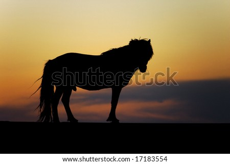 Mongolian wild horse against beautiful sunset