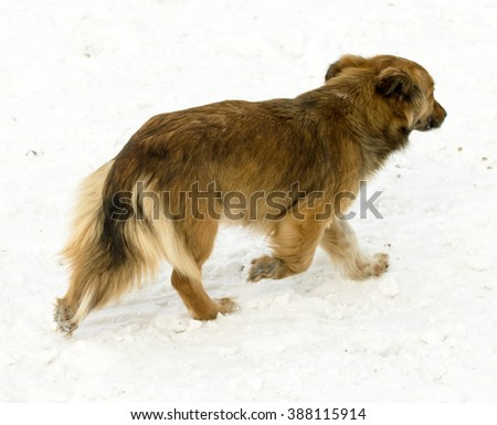mongrel dog on snow outdoors