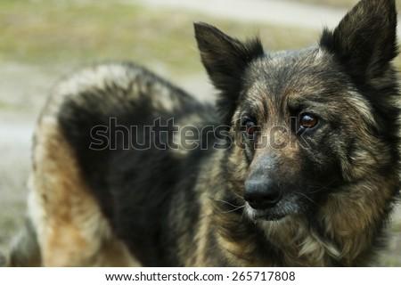 Mongrel dog outdoors - stock photo