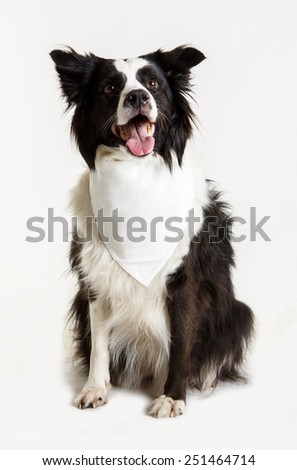 mongrel with blank white bandanna on his neck on white background