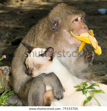 Monkey and domestic cat , Thailand . - stock photo