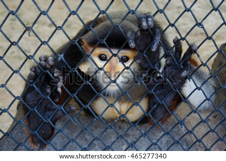 Monkey behind the cage begging for freedom