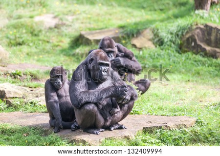 Monkey family with babies and toddlers - stock photo