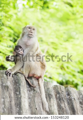 monkey family with green colour background