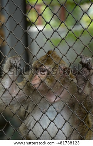 monkey feel be sad in cage
