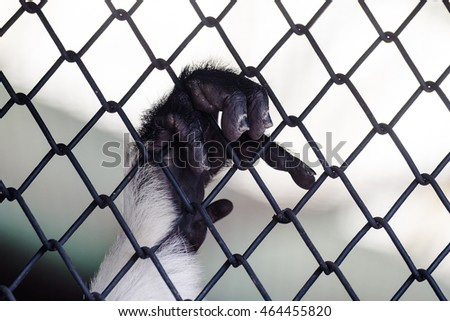 Monkey hand grab cage in concept help please