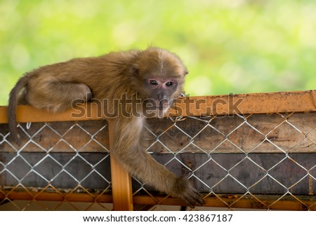 Monkey Hanging On fence with bokeh background