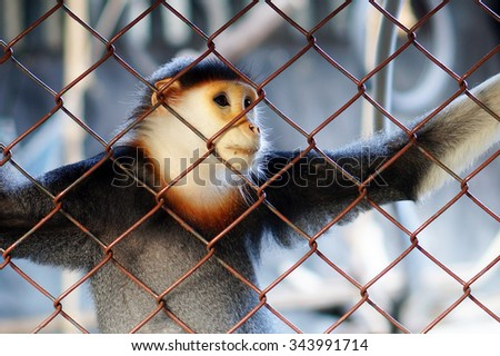 Monkey in a cage at the Zoo, Thailan