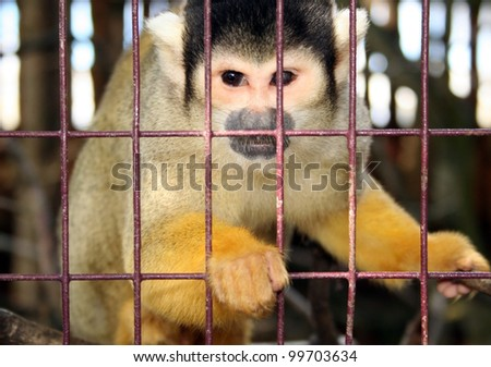 monkey in zoo or laboratory in cage. abe behind bars - stock photo