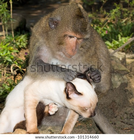 Monkey is friends with domestic cat . - stock photo
