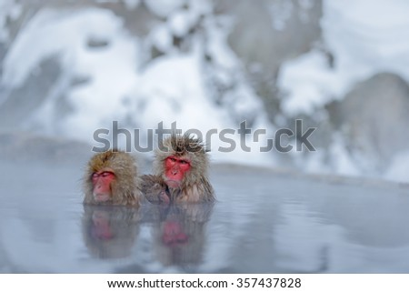 Monkey Japanese macaque, Macaca fuscata, family with baby in the water, red face portrait in the cold water with fog, two animal in the nature habitat, Hokkaido, Japan - stock photo
