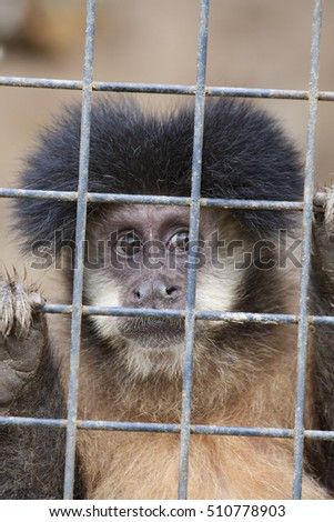 Monkey locked up in a iron cage