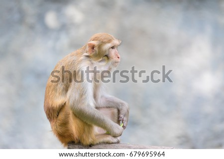 monkey/Long-tailed macaque