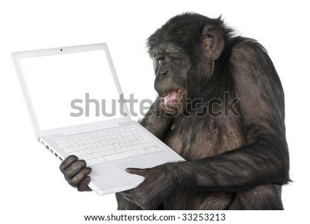monkey looking at an empty computer screen (Mixed-Breed between Chimpanzee and Bonobo) (20 years old) in front of a white background - stock photo