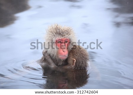 Monkey mother and baby in hot spring, Jigokudani, Nagano, Japan - stock photo