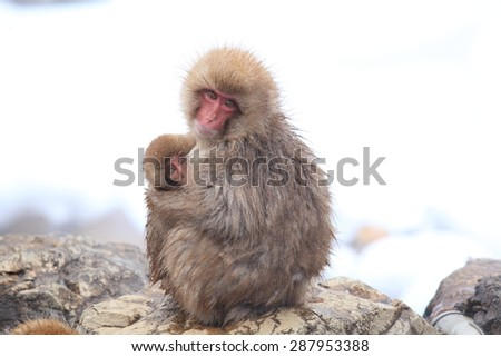 Monkey mother and baby, Jigokudani, Nagano, Japan - stock photo