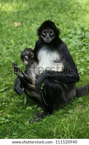 Monkey mother poses