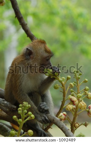 monkey on a tree - stock photo