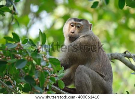 monkey on a tree branch in Khao Yai National Park,Thailand - stock photo