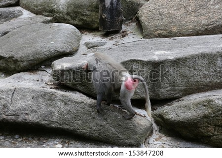Monkey on the rocks