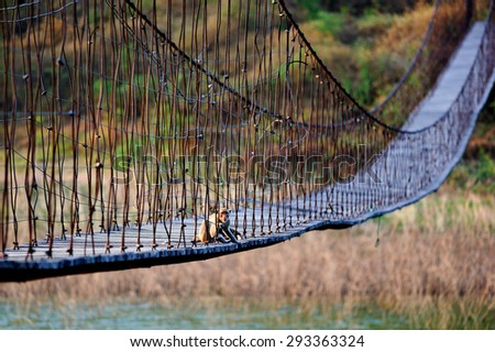 Monkey on the suspension bridge at the Kaeng Krachan
