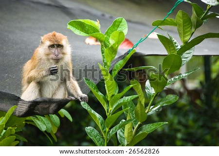 monkey on top of a net - stock photo