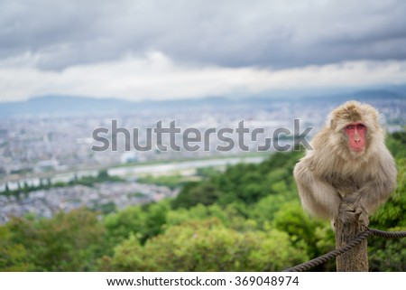 Monkey on top of trunk in Arashiyama mountain, kyoto - stock photo