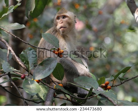 monkey on tree - stock photo