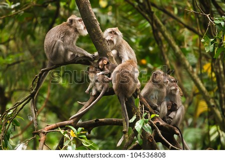 monkey�s family sitting on the branch in the forest - stock photo