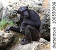 monkey sitting on a rock at the zoo. - stock photo