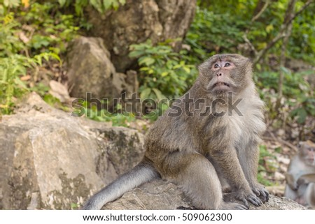 Monkey sitting on stone in forest.