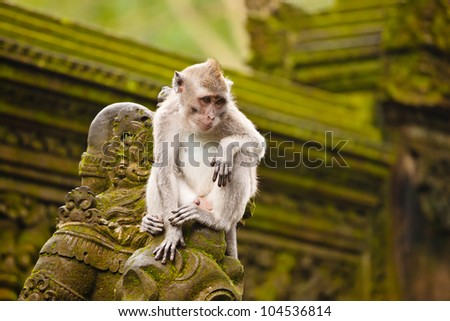 monkey sitting on the old statue in temple and looking down - stock photo