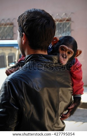 Monkey sitting on the young man's shoulder