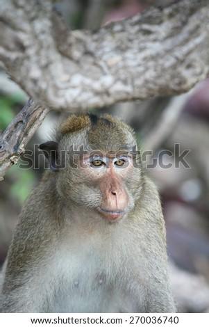 Monkey, Thailand. - stock photo