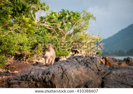 Monkey waiting for and looking for chance to stolen food in an island of andaman sea ,thailand.