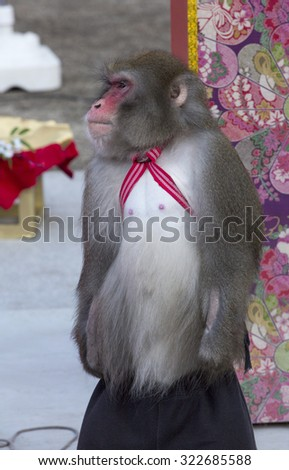 Monkey waiting to be given the cue to start doing tricks for the audience that gathers to watch them in the street in front of the Tokyo Tower. - stock photo