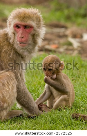 monkey with baby on the grass - stock photo