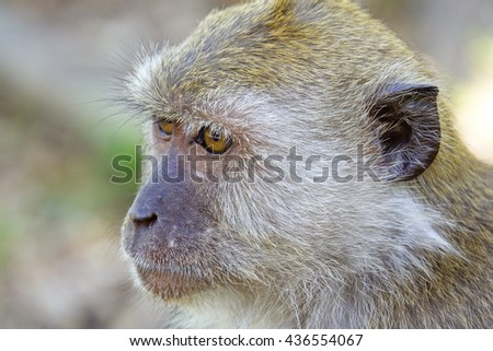 Monkey with blurry background:Close up,select focus with shallow depth of field.