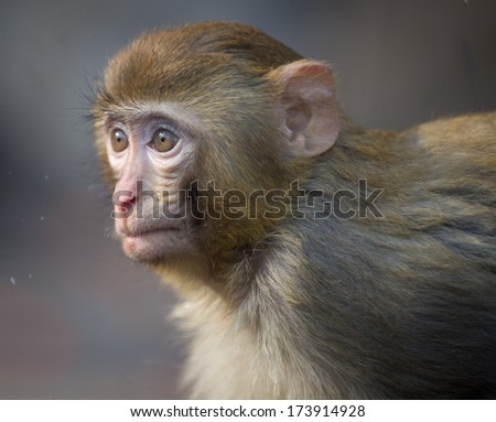 Monkeys - stock photo