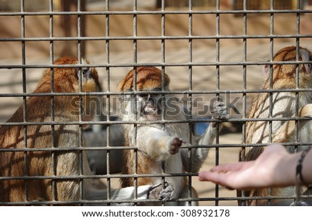 Monkeys in the cage at Monkey park, Tenerife, Canary island