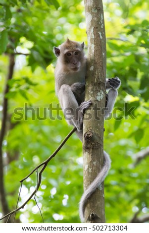 Monkeys(Long-tailed macaque) on a tree branch in the forest.