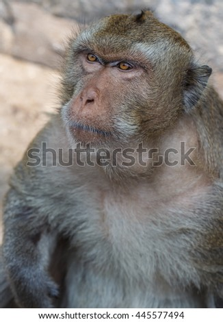 Monkeys portrait have blue eyes and orange of a monkey face in a natural forest