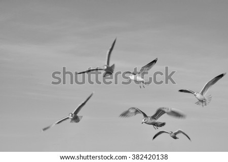 Monochromatic image of seagulls in motion. - stock photo
